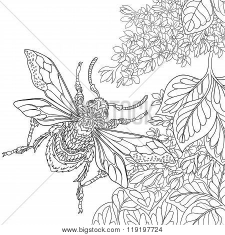 Zentangle Stylized Beetle Insect