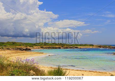 Mediterranean maquis .Salento coast: Lido Marini beach (Lecce). ITALY (Apulia).