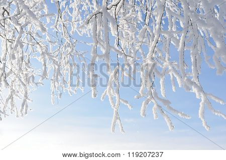 White Snowcovered Tree Branches Over Clear Blue Sky