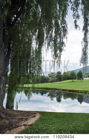 willow tree in front of lake