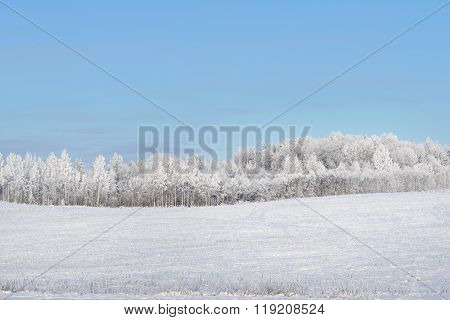 Snowcovered field surrounded by forest. Winter wonderland.