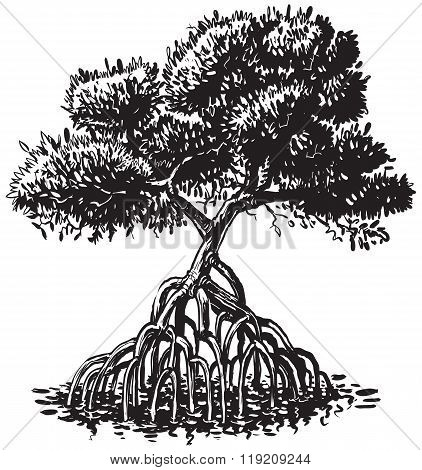 Mangrove Tree Ink Style Vector Cartoon Illustration