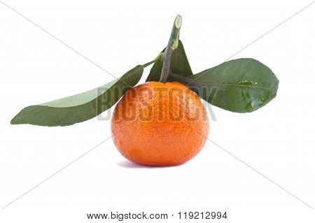Tangerine with sheet