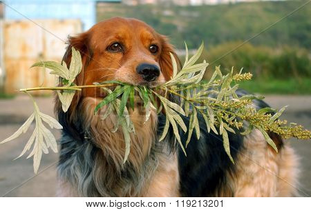 Dog with  wormwood