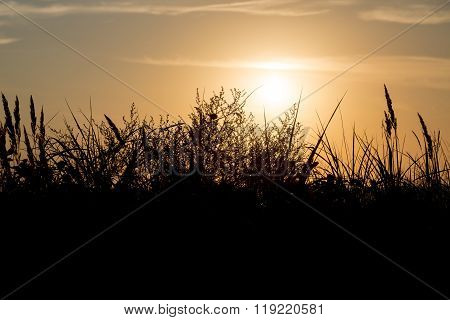 Silhouette Of Marram Grass And Sunset