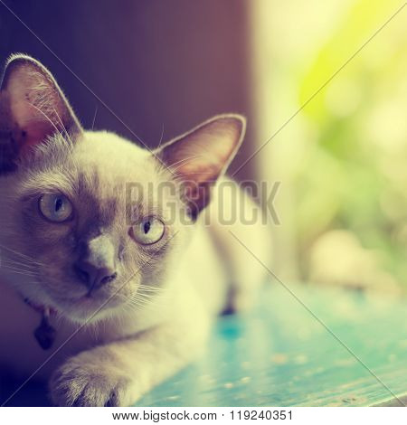 Cute Cat absent-minded near window - vintage color effect soft focus