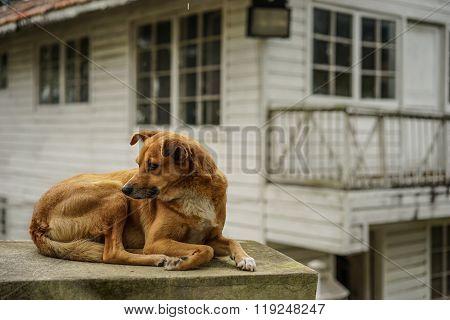 Brown Dog On The Wall