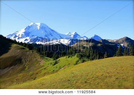 mountain meadow
