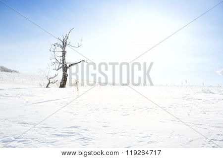 Dead Tree On Snow-covered Field