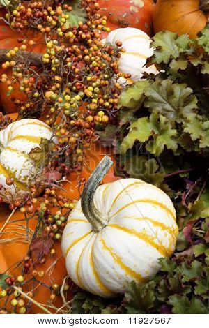 Colorful pumpkins and fall decor