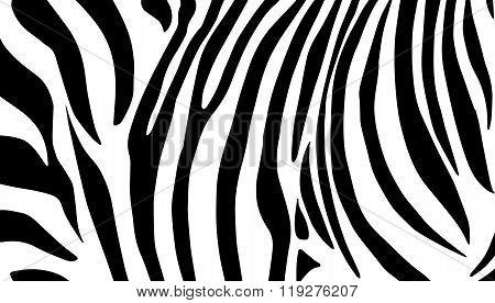 Zebra stripes skin background