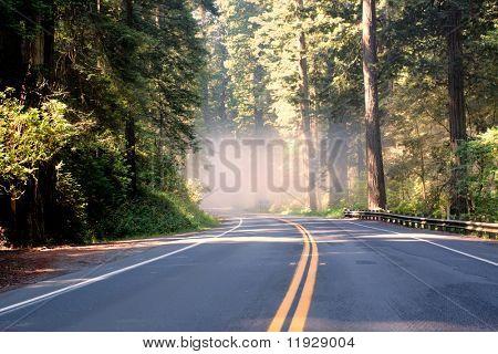 Asphalt road running through forest