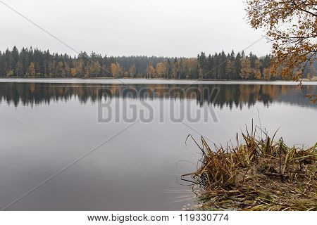 Nature Reserve Kladska Peats