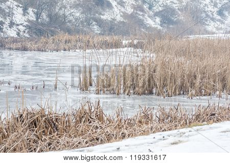 Frozen Reeds Over Icy Lake. Static Imagine With Snowy Winter Landscape And Dry Frozen Reeds On The S