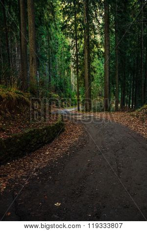 Old Curve Road Through Forest