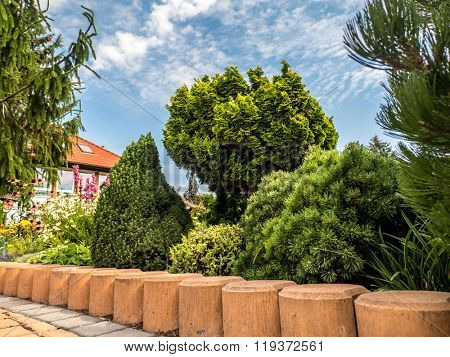 House garden with various coniferous plants