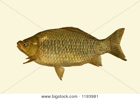 Crucian On A White Background.