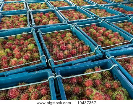 Many Rambutan In Baskets.