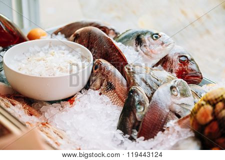 Fish on ice on market store shop. Dorado fish on ice - healthy f