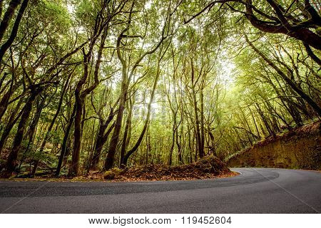 Forest road on La Gomera island