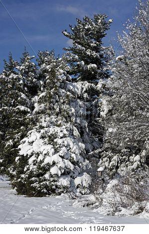 Snow Covered Blue Bird Box