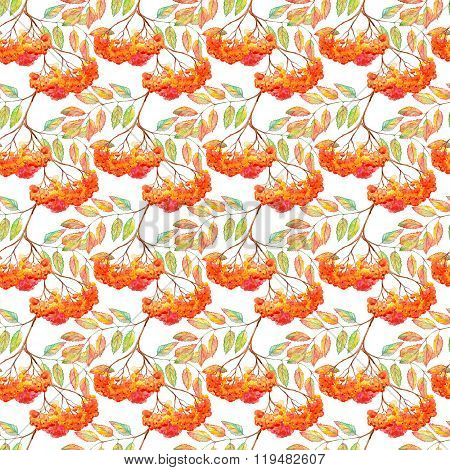Watercolor Rowan Ashberry Leaf Branch Seamless Pattern