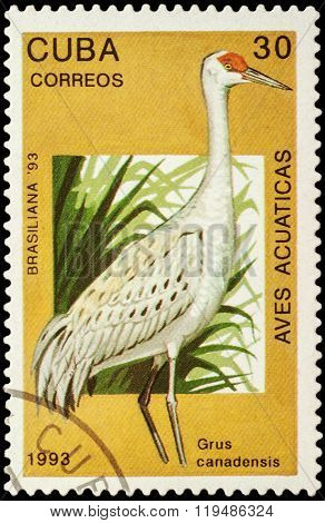 Sandhill Crane (grus Canadensis) On Postage Stamp