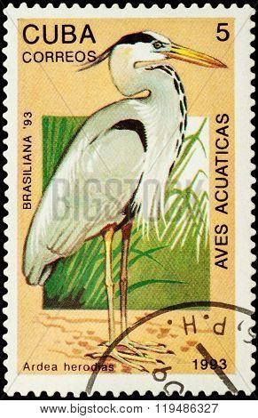 Great Blue Heron (ardea Herodias) On Postage Stamp