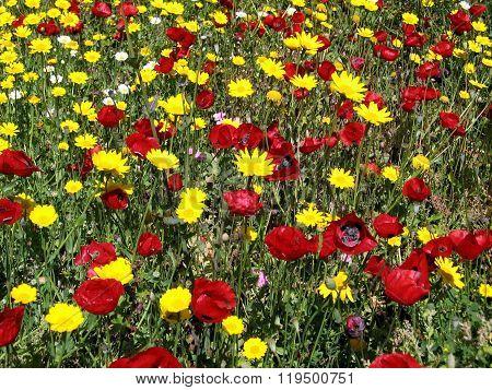 Ramat Gan Park The Wild Flowers 2007