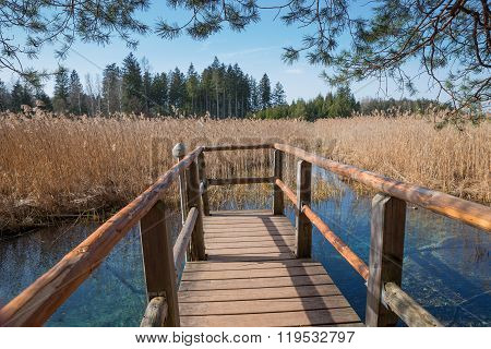 Wooden Boardwalk With View To Blue Fount In The Swamp