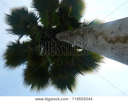 Palm tree in perspective