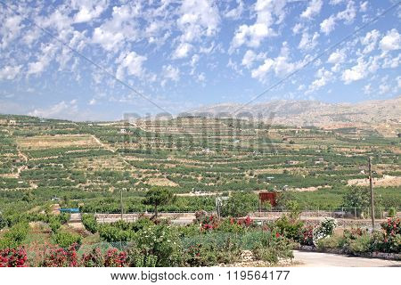 Kibbutz Agricultural Fields In The Golan Heights