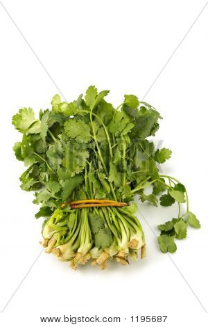 Juicy Fragrant Coriander