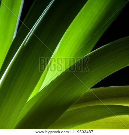Detail Of Green Plant Stem