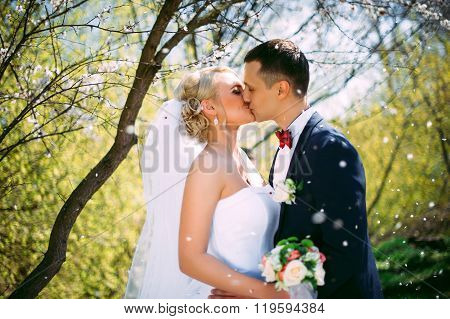 Kissing Wedding Couple In Spring Nature Close-up Portrait. Kissing Wedding Couple In Spring Nature C