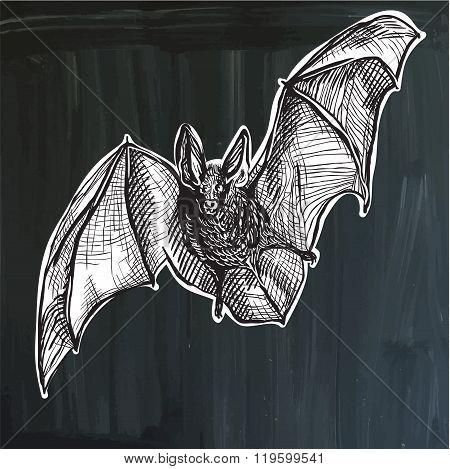 Bat - Freehand Sketching, Vector