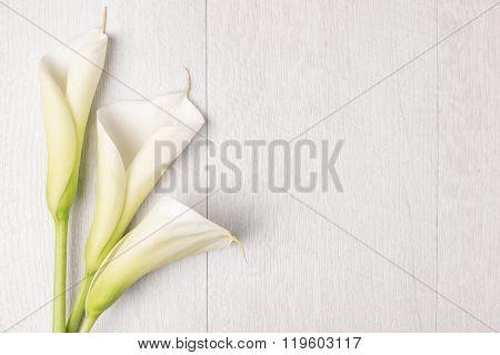 Elegant Spring Flower, Calla Lily