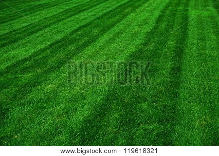 sport grass field after mowing