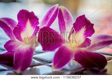 Two orchid flowers