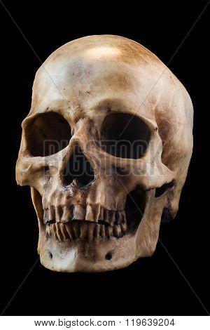 Human skull on black background