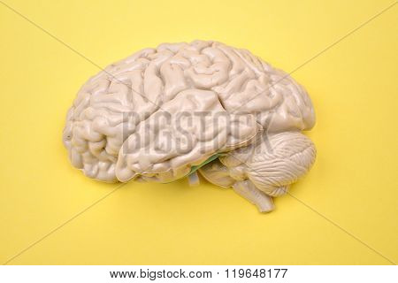 3D Human Brain Model From External On Yellow Background