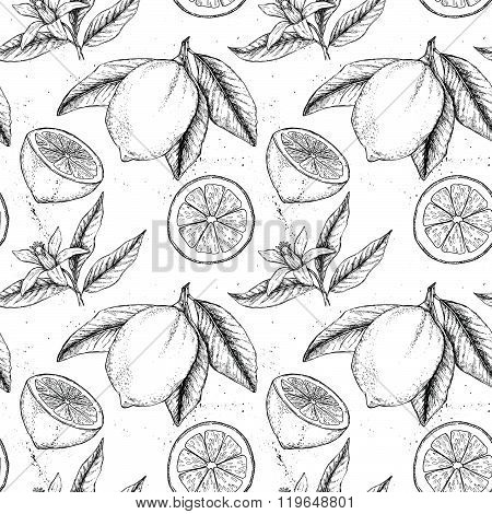 Hand Drawn Vector Seamless Pattern. Collections Of Lemons. Branch With Lemon. Lemon Blossom