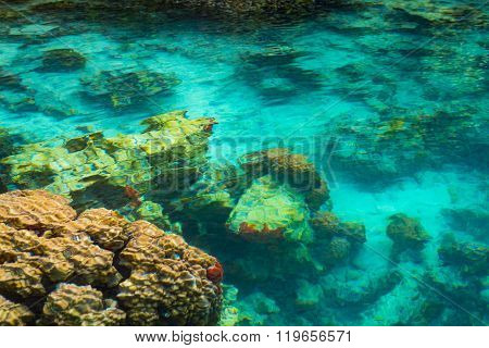 Shallow Coral Reef In Turquoise Transparent Water, Indonesia