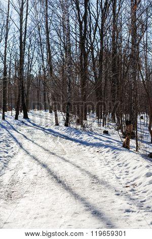 Slippy Footpath In Urban Park In Winter