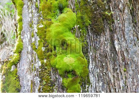 Various Green Mosses And Lichens