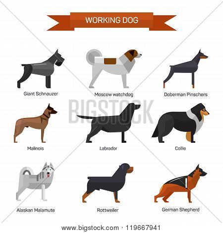 Dog breeds vector set isolated on white background. Illustration in flat style design. Icons