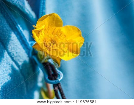Small yellow flower in the buttonhole of a blue sweater