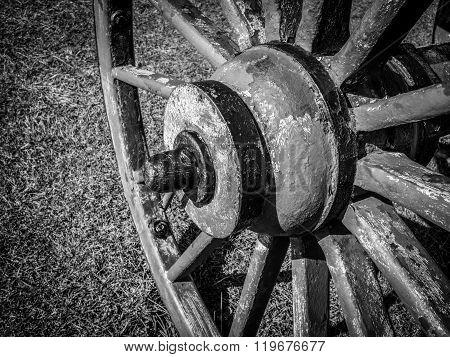 B/W Wheel on Cannon