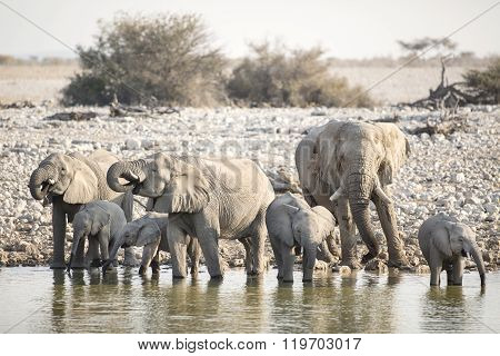 Elephant at a water hole in Etosha National Park ** Note: Visible grain at 100%, best at smaller sizes