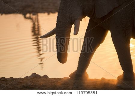 Elephant abstract at a water hole in Namibia.